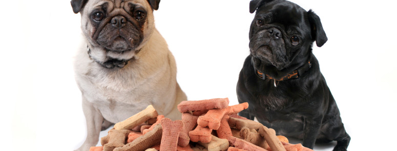 What Is Really In Your Dog Treats